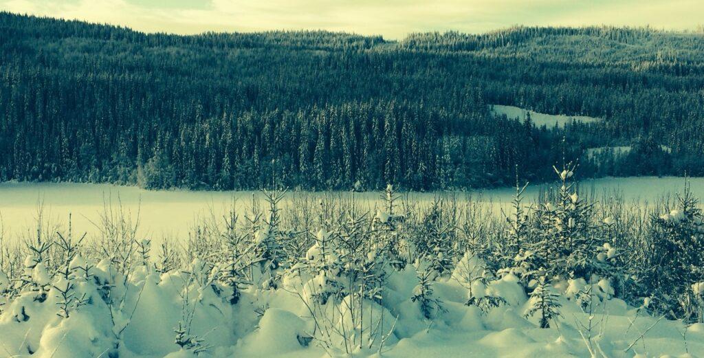 Eiendomsadvokat i Narvik
